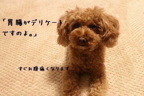 Img_8883_11